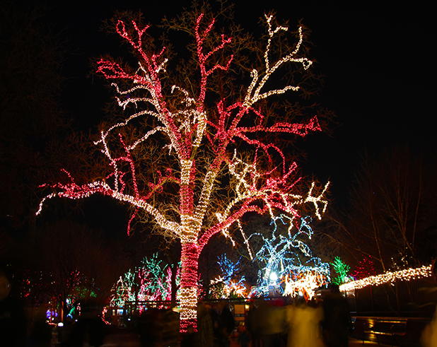 Trees illuminated by holiday lights.